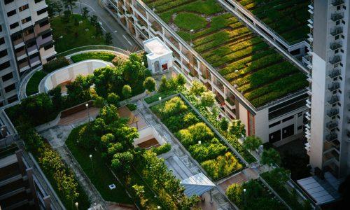 zelené střechy pohled