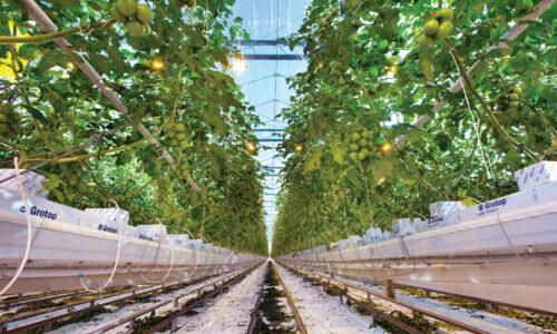 Hydroponické pěstování a výživa rostlin