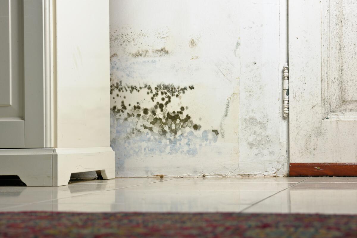 Plíseň a vlhkost v bytě