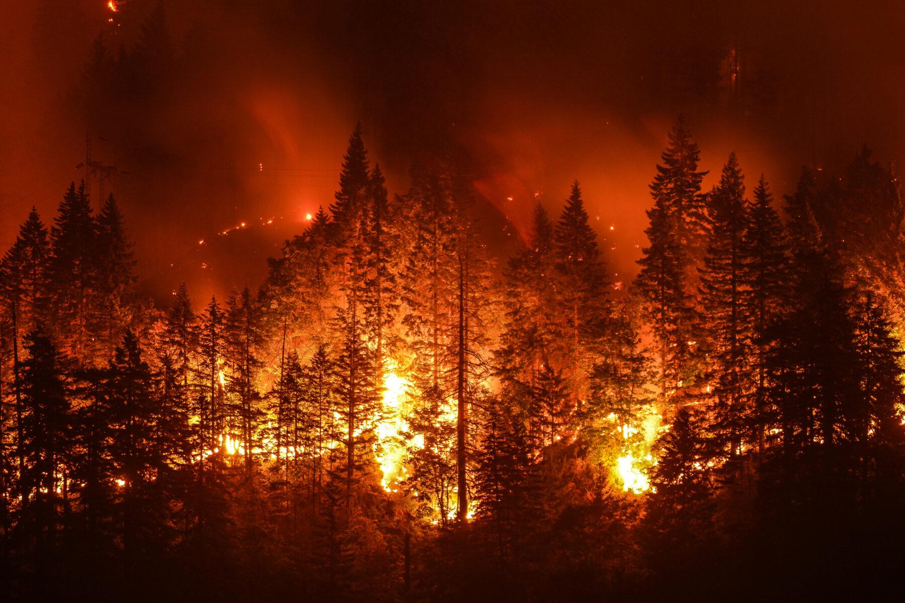 """""""Výsledkem"""" změny klimatu je také stále více požárů."""